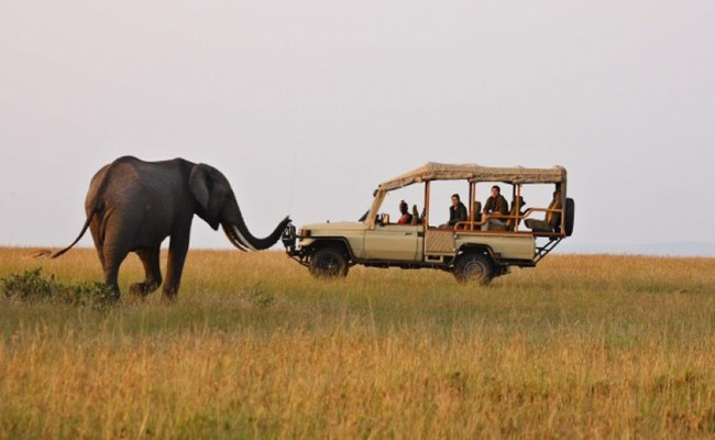 Masai Mara elephant and vehicle