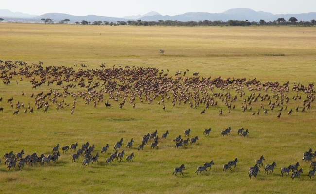 Serengeti Migration